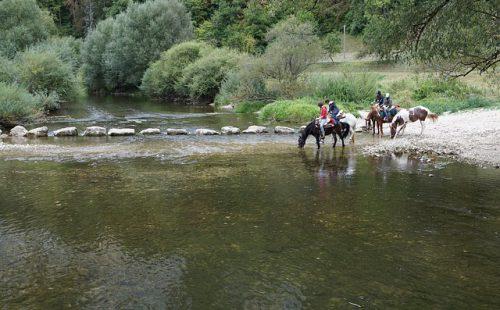 horses-1678634_640